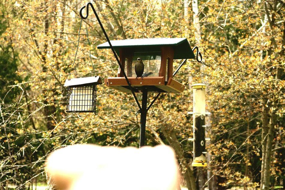 Bird Birdfeeder Nature Arboretum
