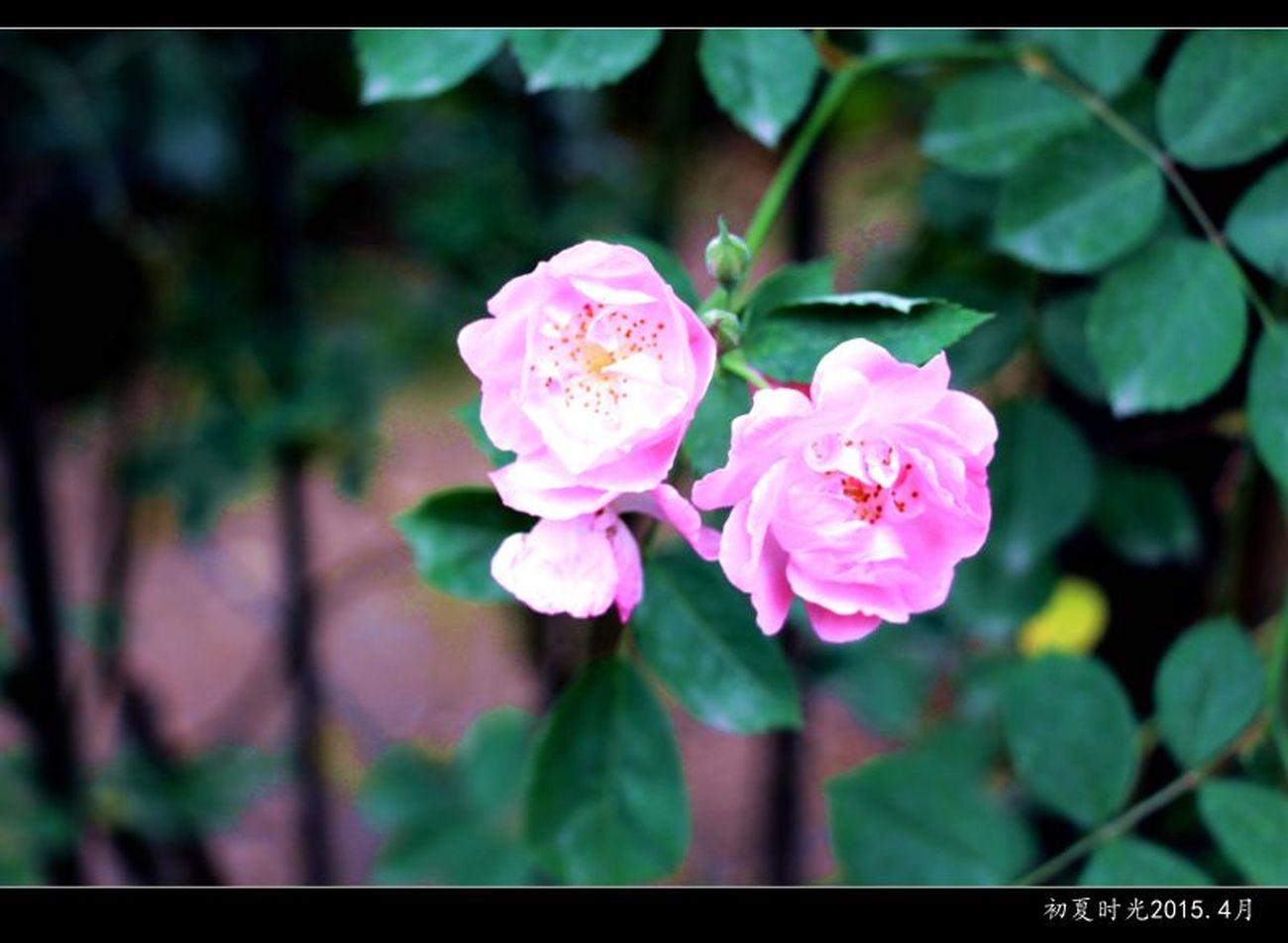 花朵 First Eyeem Photo