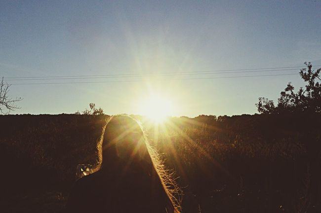 Taking Photos Silhouette Sun ☀️