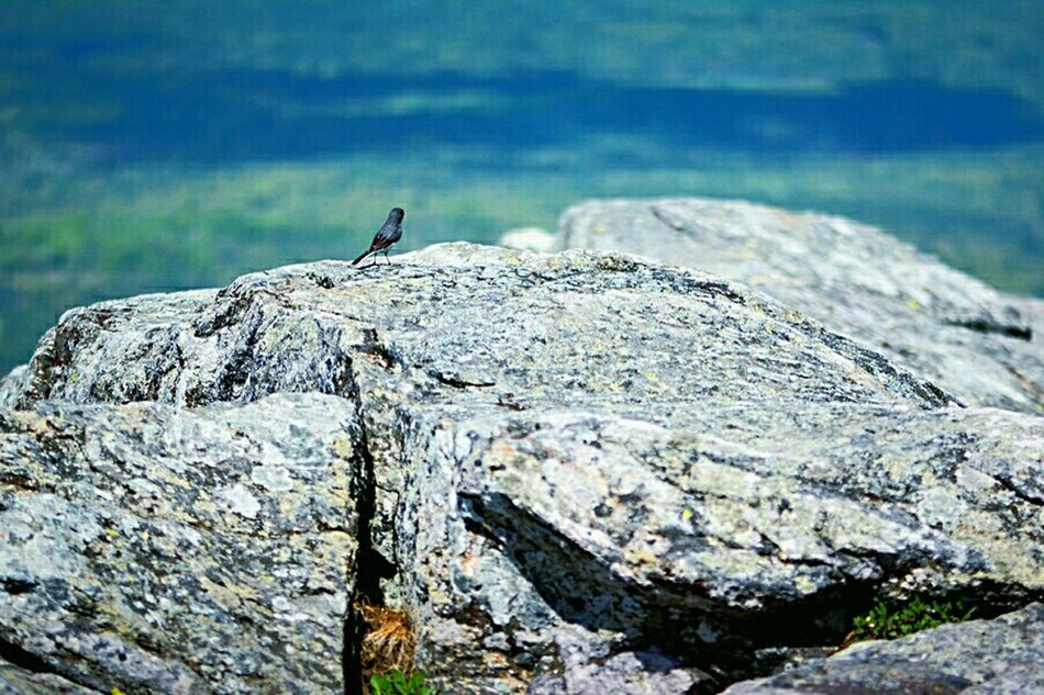 Capturing Freedom Free bird at the peak of Mt. Monadnock, New Hampshire.