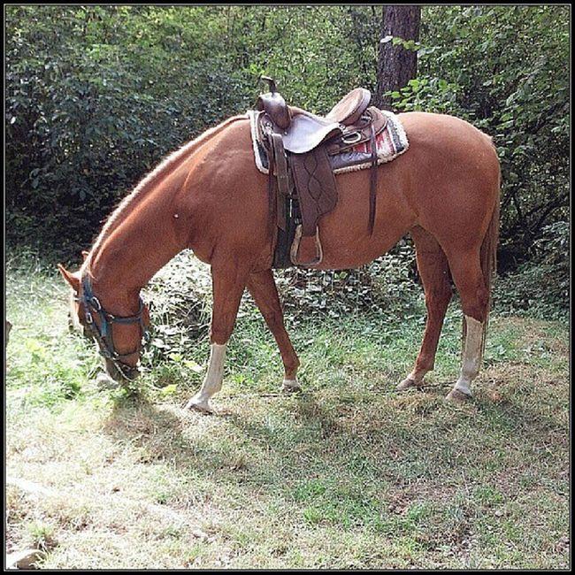Horse Camping GoodTimes Goodfriends tahuyastateforrest hashtagaddiction droidrazr