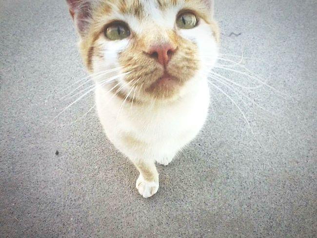 Up Close & Personal Hello World Kittylove Pet Portraits