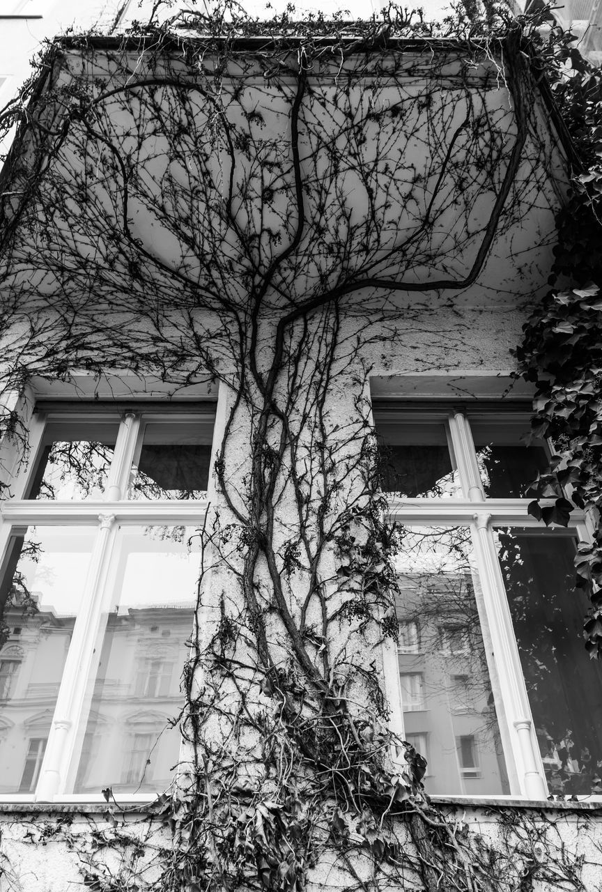 architecture, building exterior, built structure, tree, branch, low angle view, bare tree, outdoors, window, day, no people, nature