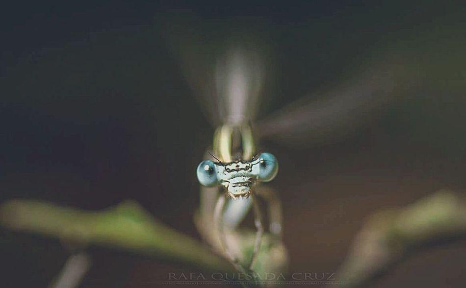 Macro Photography Macro Libelula Pasión Por Las Libelulas