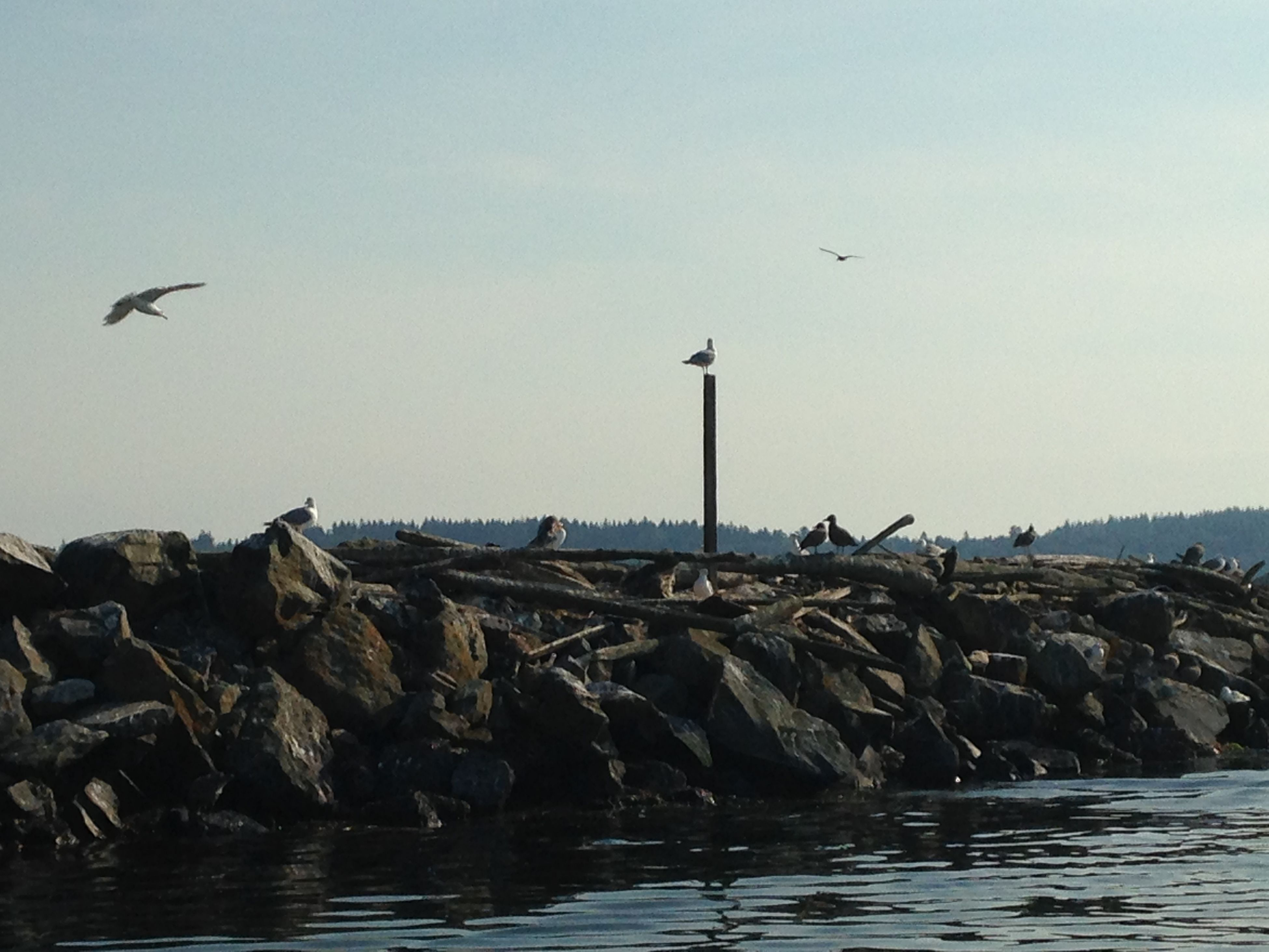 water, bird, sea, animal themes, rock - object, animals in the wild, wildlife, tranquility, tranquil scene, nature, waterfront, scenics, flying, sky, clear sky, beauty in nature, seagull, rock, copy space