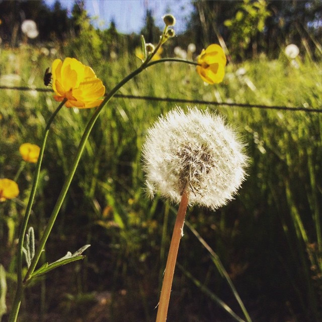 flower, nature, growth, fragility, plant, stem, beauty in nature, focus on foreground, freshness, yellow, close-up, outdoors, flower head, day, no people, blooming