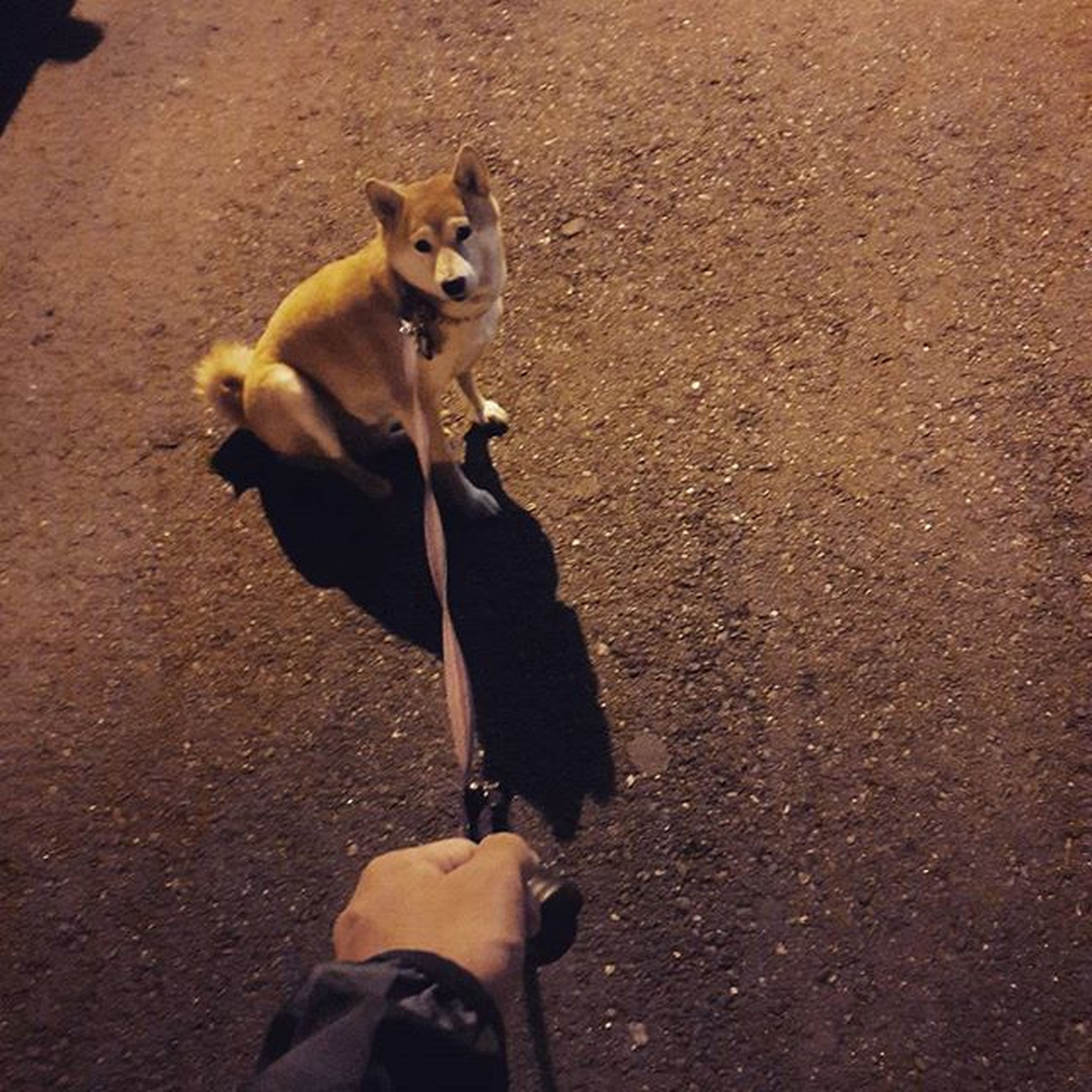 dog, pets, one animal, mammal, domestic animals, animal themes, personal perspective, lifestyles, high angle view, street, road, leisure activity, person, standing, shoe, low section, men, holding