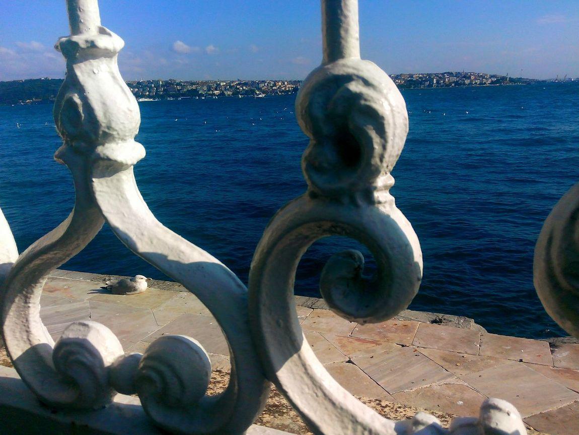 Martı SeagullDeniz Kenarı Seaside Odak Focus Selective Focus SeagulRelaxing Time Istanbul - Bosphorus