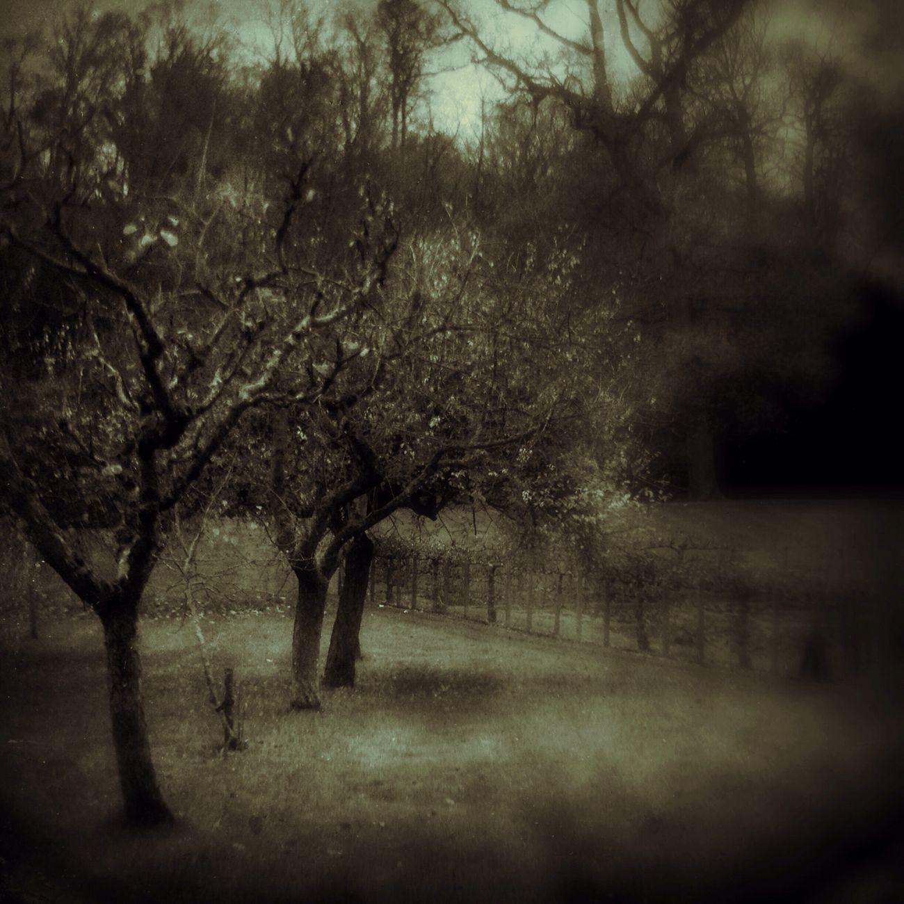 Autumn Apple Trees Painswick Rococo Garden NEM Landscapes Shootermag NEM Memories