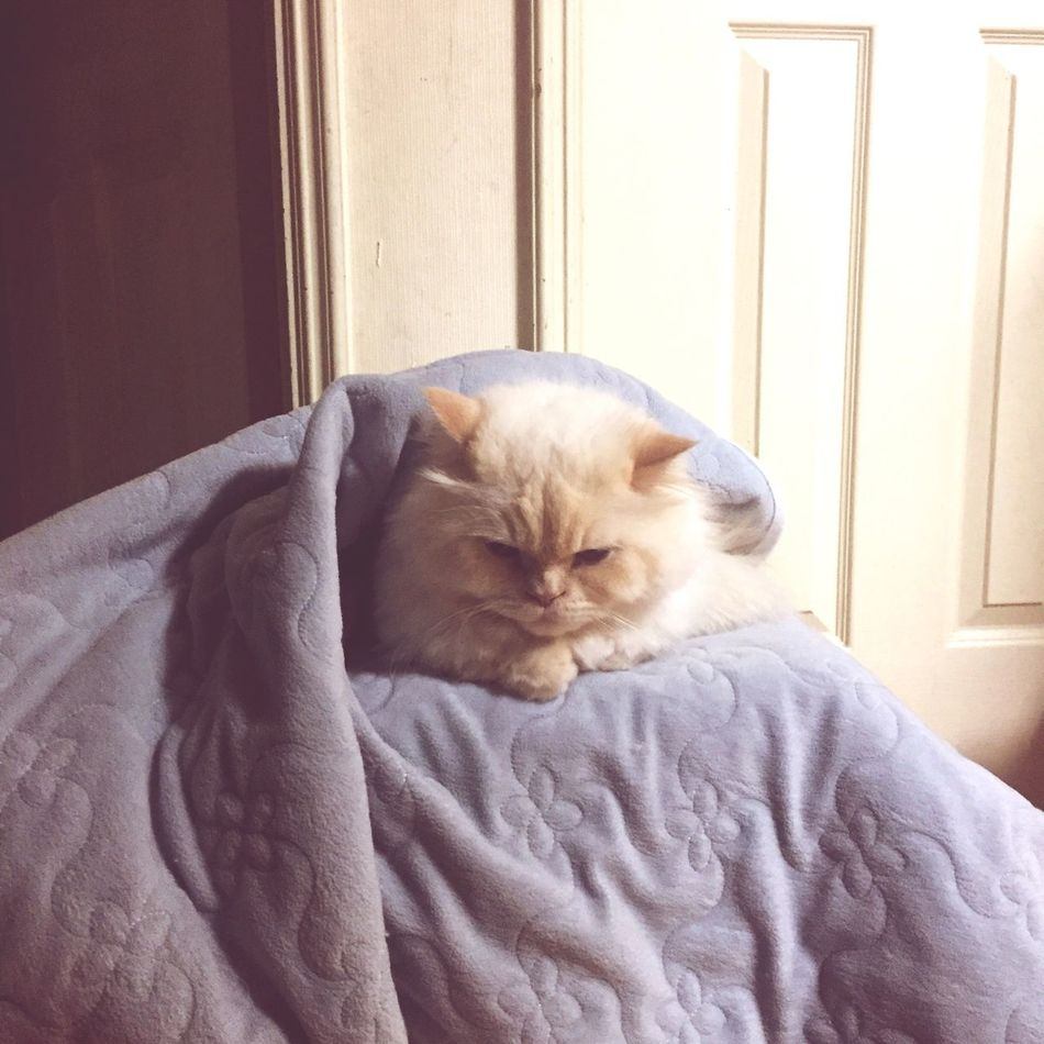 Did I tell you? I Hate Cold. Heema Ugly Cute Cat