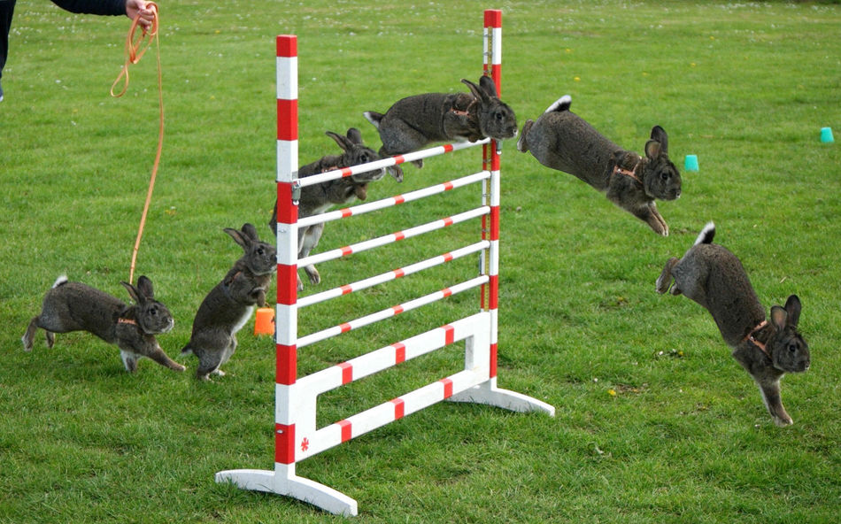 Beautiful stock photos of hasen, Animal Themes, Barricade, Black Color, Day