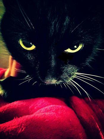 Cat Eyes Yelloweyes