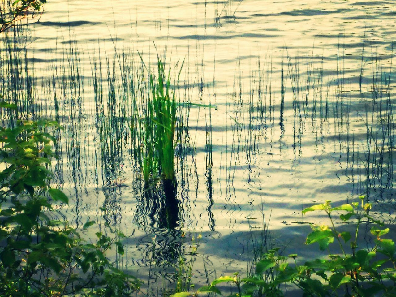 nature, growth, plant, no people, day, tranquility, beauty in nature, tranquil scene, outdoors, grass, water, scenics, tree