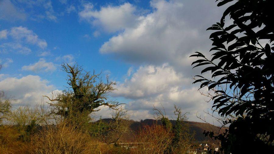 Mittags in Hagen Straßenfotografie Streetphotography Südwestfalen Westfalen NRW Landscape Panorama Smartphonephotography Wetteraussicht Hagen Tree Cloud - Sky Sky Nature No People Day Blue Outdoors