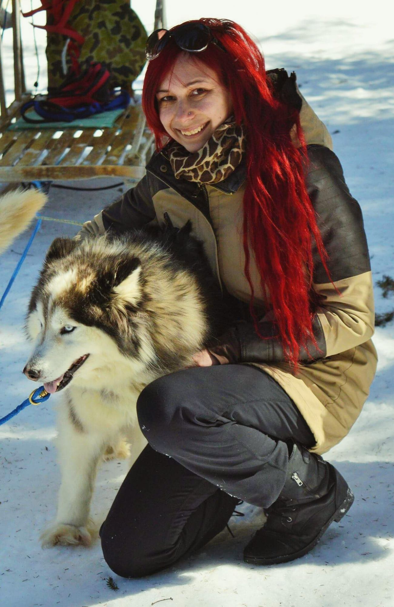 Dog Sled Husky Selfportrait Sunny Winter Day Amazing Experience