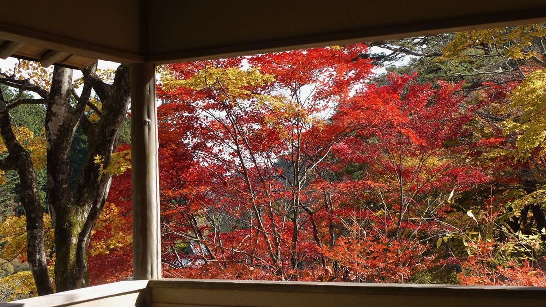 Autumn Beauty In Nature Branch Change Day Growth Indoors  Multi Colored Nature No People Orange Color Red Red Color Scenics Tranquility Tree Vibrant Color