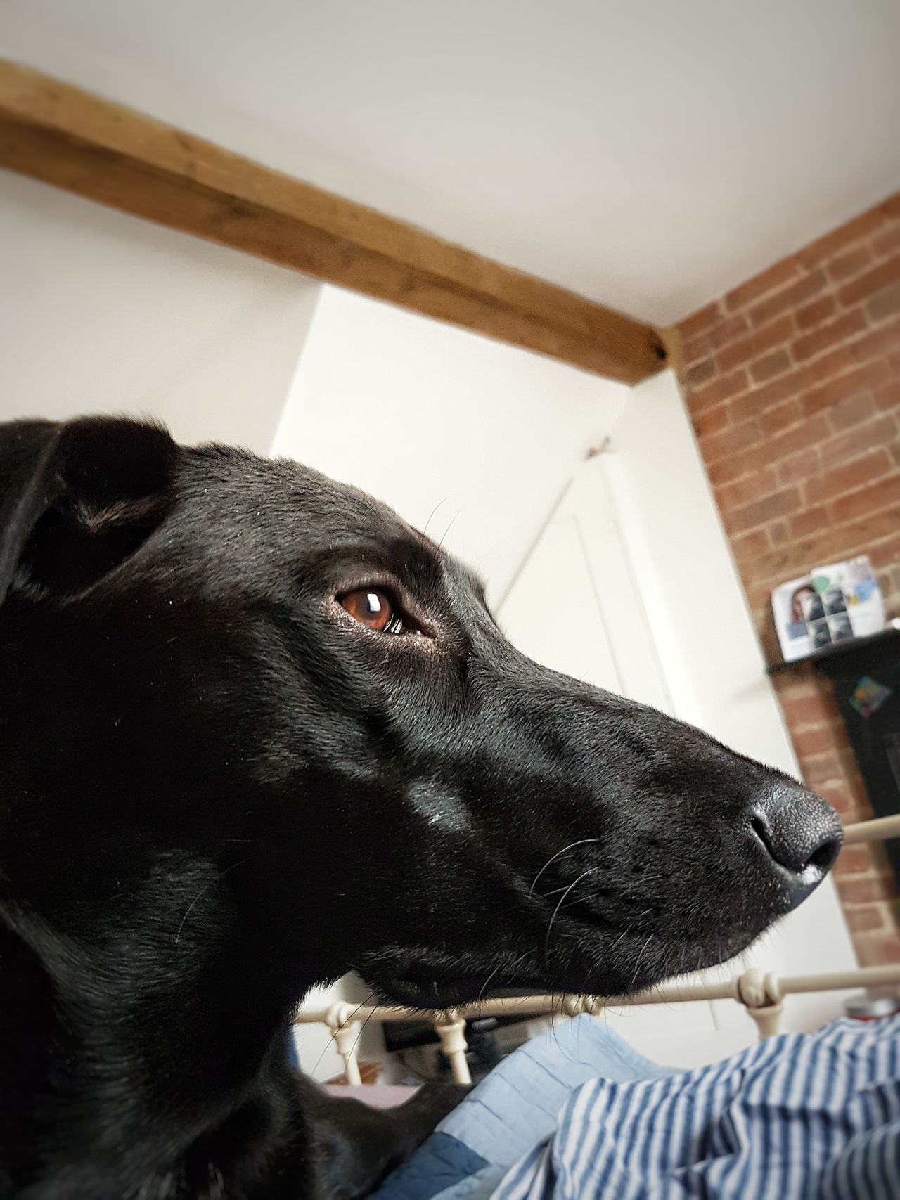 One Animal Pets Animal Themes Indoors  Domestic Animals Sitting Close-up Portrait One Person Mammal Dog Day Sky People