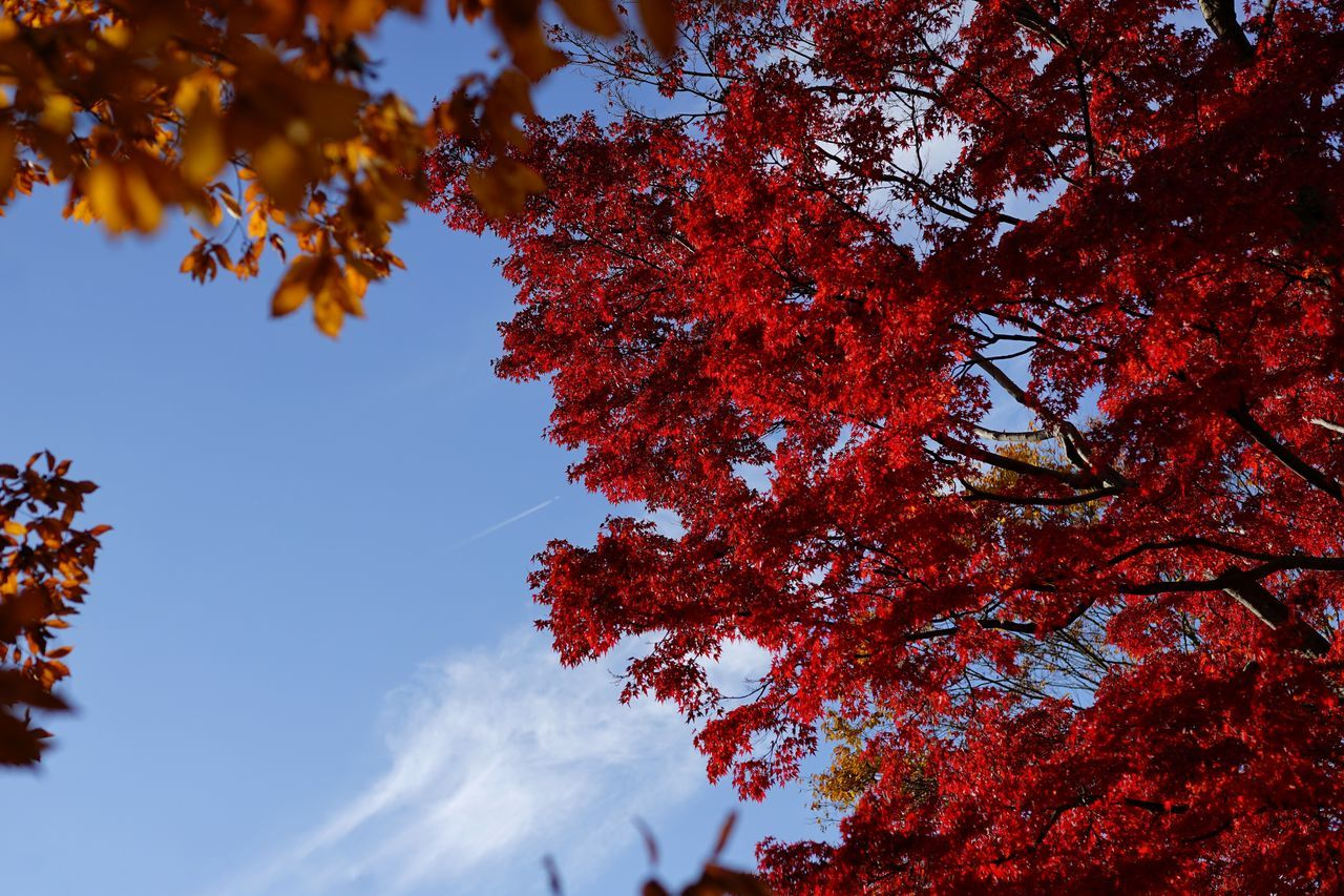 Capture The Moment Beauty In Nature Red Autumn🍁🍁🍁 My Year My View Tranquil Scene Selective Focus Landscapes Scenics Fine Art Nature Autumn Colors Tranquility Light And Shadow SkySnapshots Of Life Tree Fantasy Majestic Depth Of Field Detail Full Frame Sigma EyeEm Best Shots 16_12