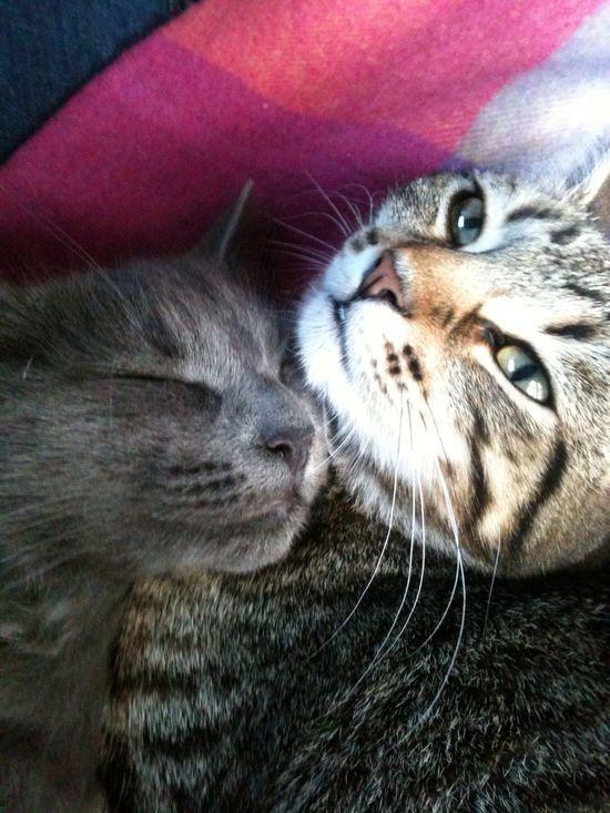 Sisters Sisters Cats Sleepy Relaxing