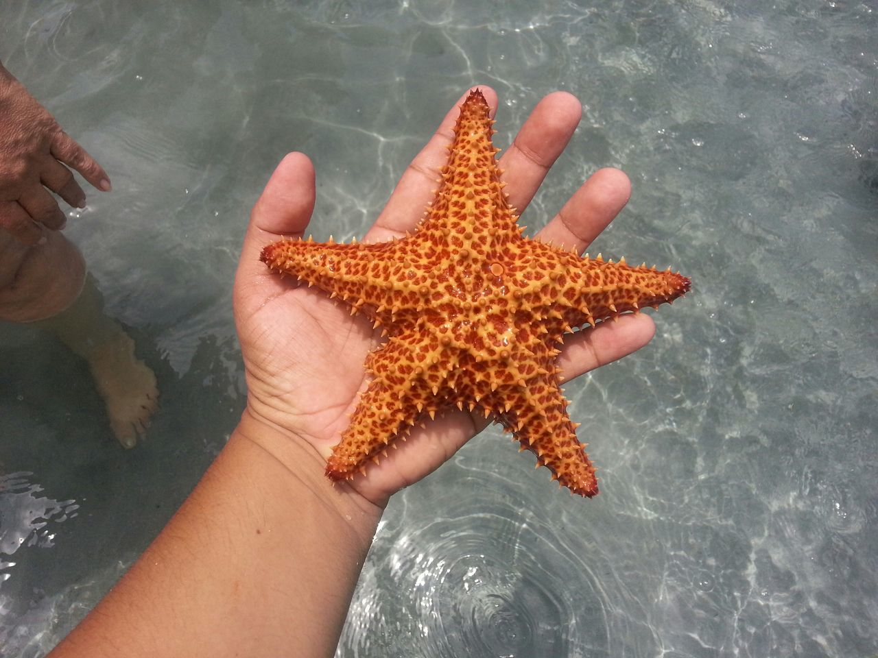 Beautiful stock photos of starfish, Animal Themes, Beauty In Nature, Cropped, Day