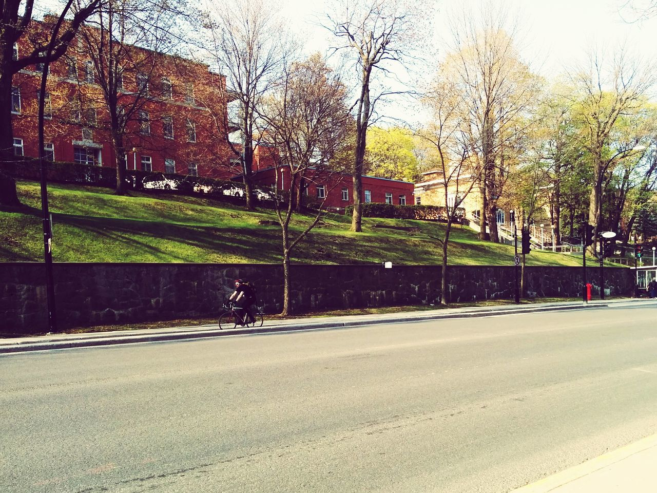 road, tree, transportation, street, bare tree, outdoors, day, no people, car, nature, sport, grass, city, sky
