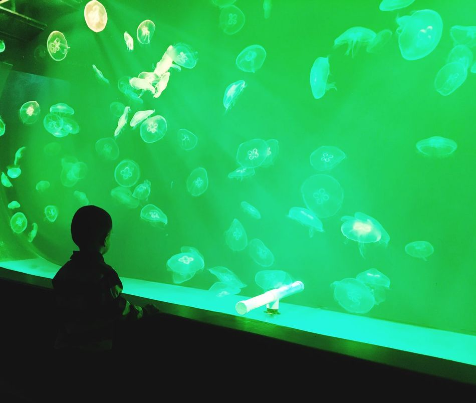 Aquarium One Person Boys One Boy Only Water Animal Themes океанариум The Secret Spaces EyeEmNewHere