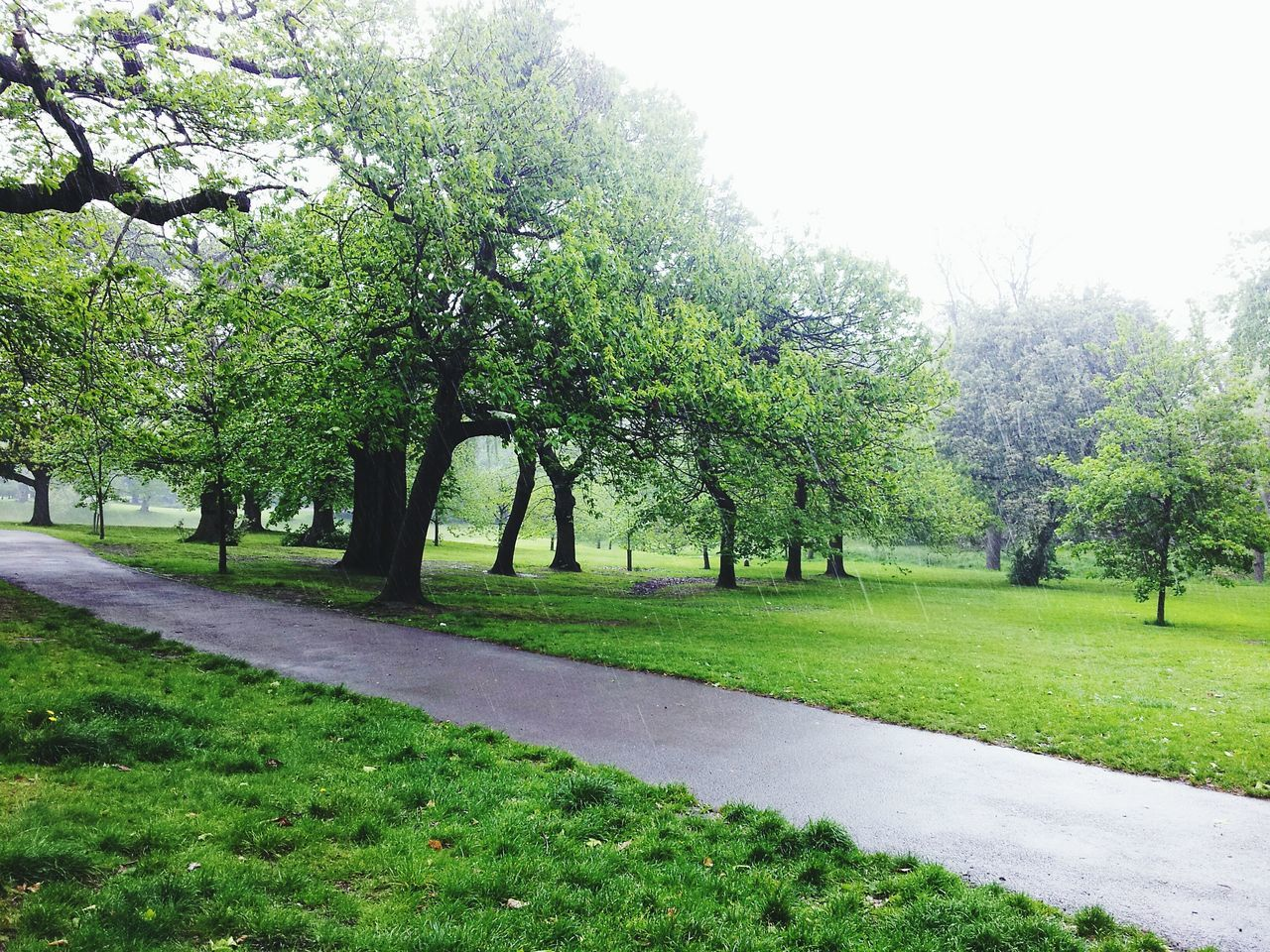 Tree Nature Growth Green Color No People Landscape Outdoors Day Sky Nature Scenics Green Color Grass Greenwich Park Beauty In Nature Greenwich,London Tree Trunk