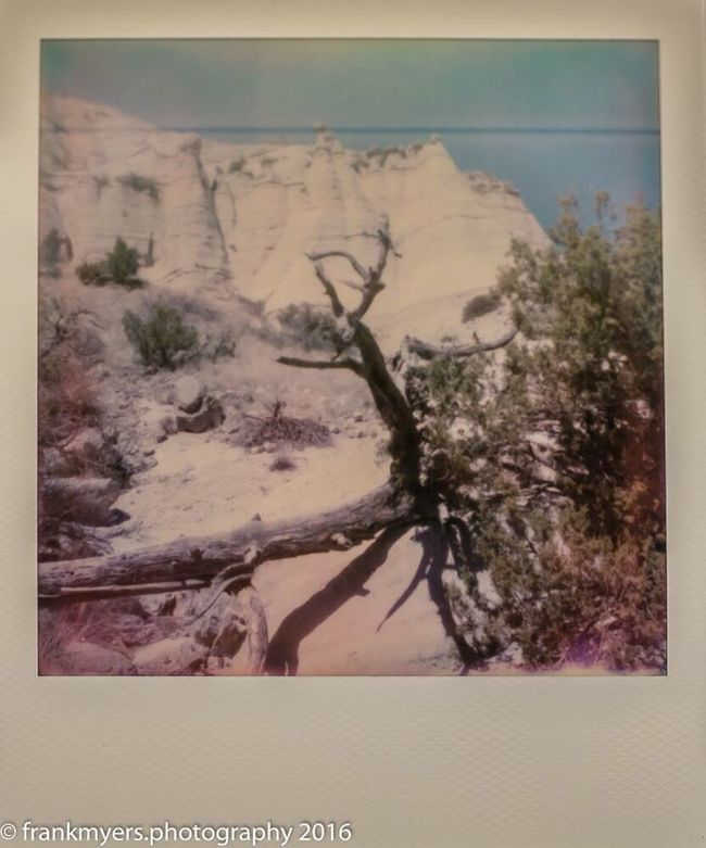 New Mexico Tree Scenics Impossible Project Desert Landscape