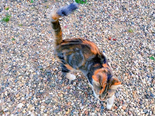 Cat's Eyes CHATFIE Catfie Cats Of EyeEm Chat Cat Mon Ami Le Chat