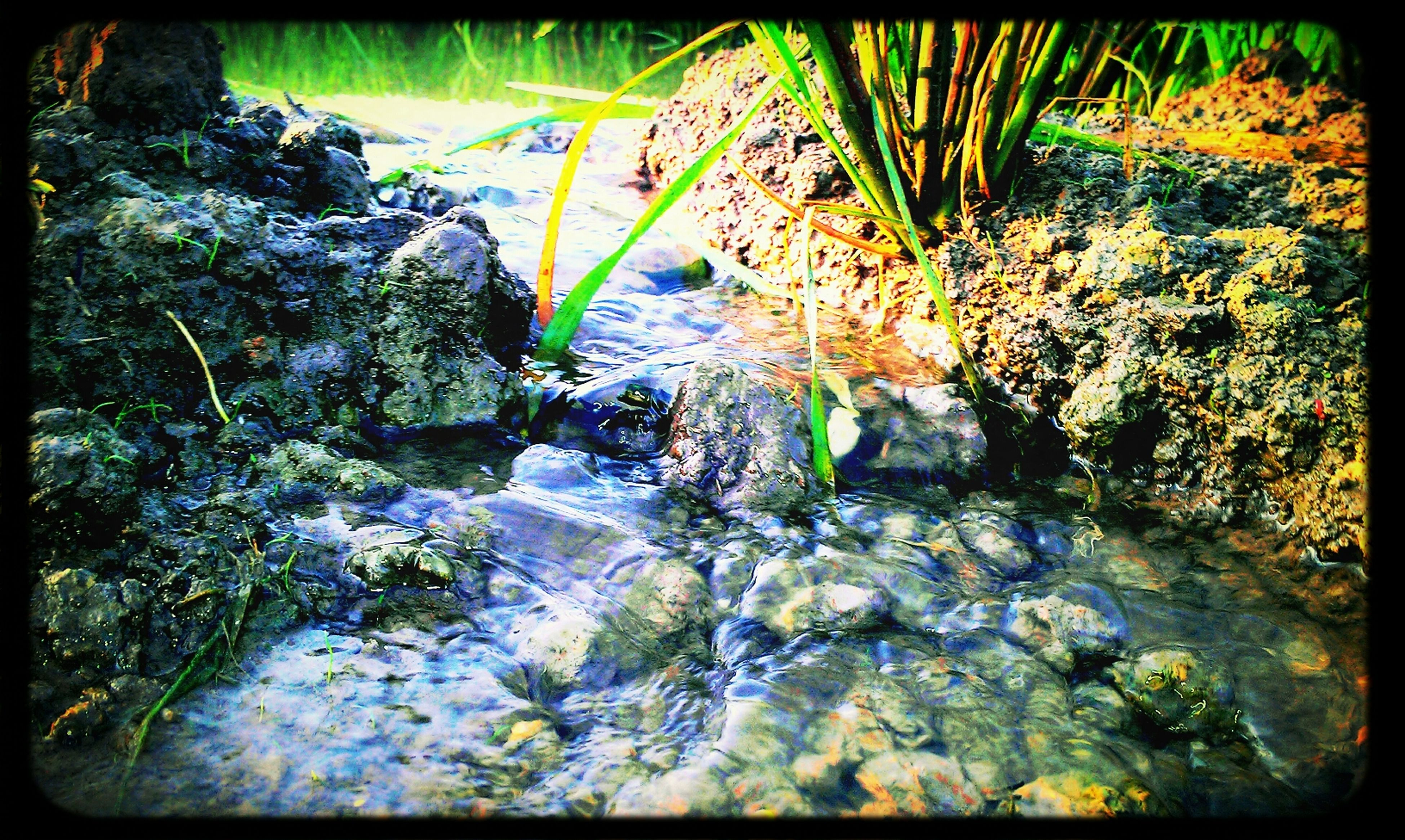 transfer print, auto post production filter, water, nature, growth, plant, high angle view, beauty in nature, rock - object, tranquility, stream, day, outdoors, no people, leaf, sunlight, rock, forest, river, waterfront