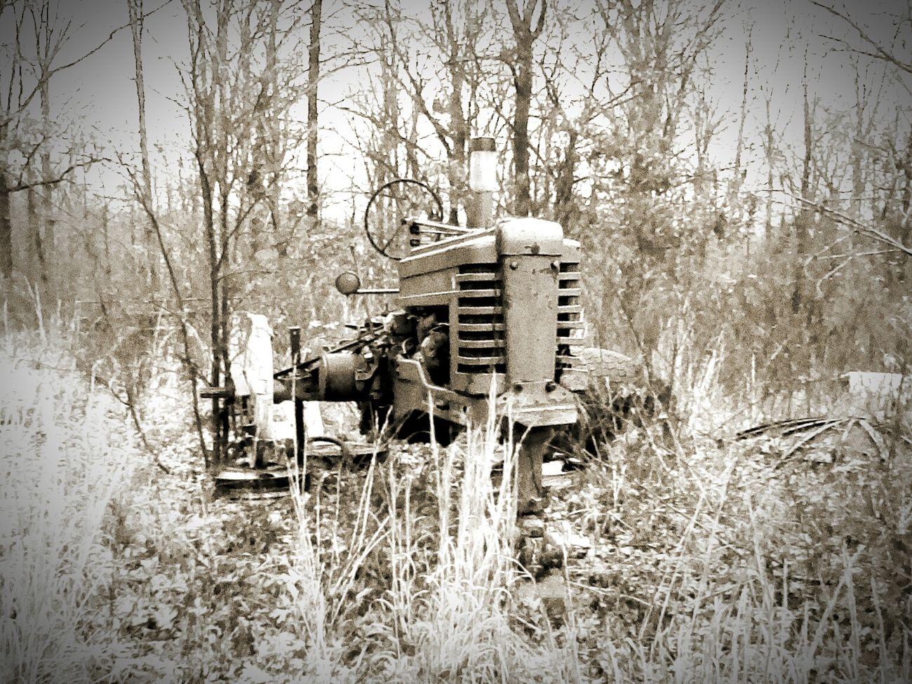 Winter Nature Grunge Vintage Indie B&w Vintagejunkyard Hipster