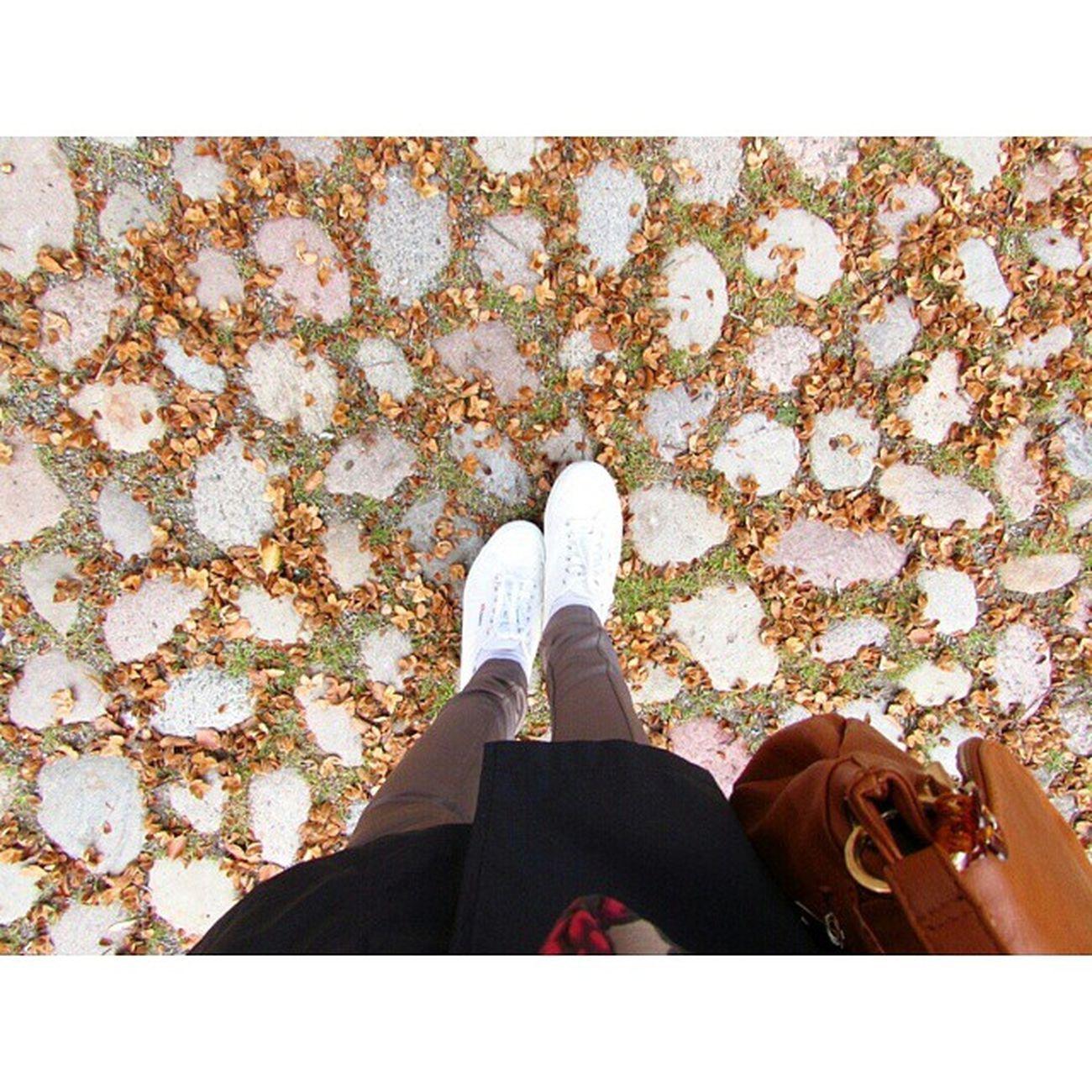 Camminare Foglie Autunno  Scarpe freddoritornoalpassatoGermany ♥