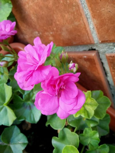 Flores Plants And Flowers Plantas Nature Colors Flowers Showcase: January Enero Sol Sun Colores Winter Invierno Naturaleza Malaga