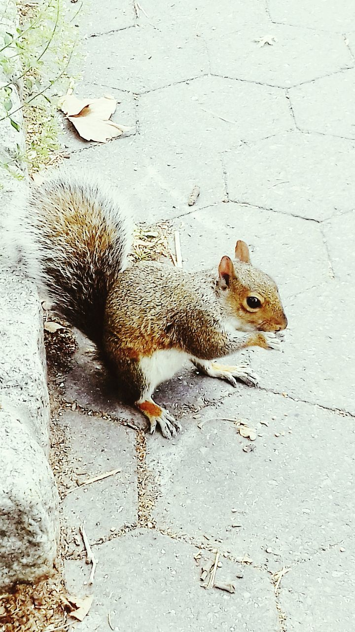high angle view, one animal, animal themes, no people, mammal, squirrel, outdoors, nature, day