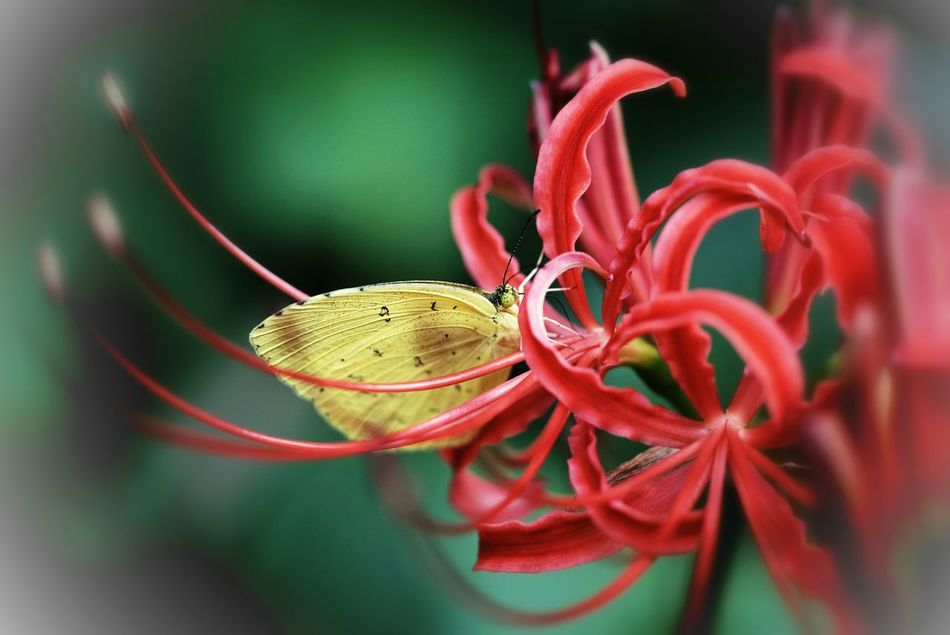 Flower & Butterfly Macro_collection Macroclique Nature_collection