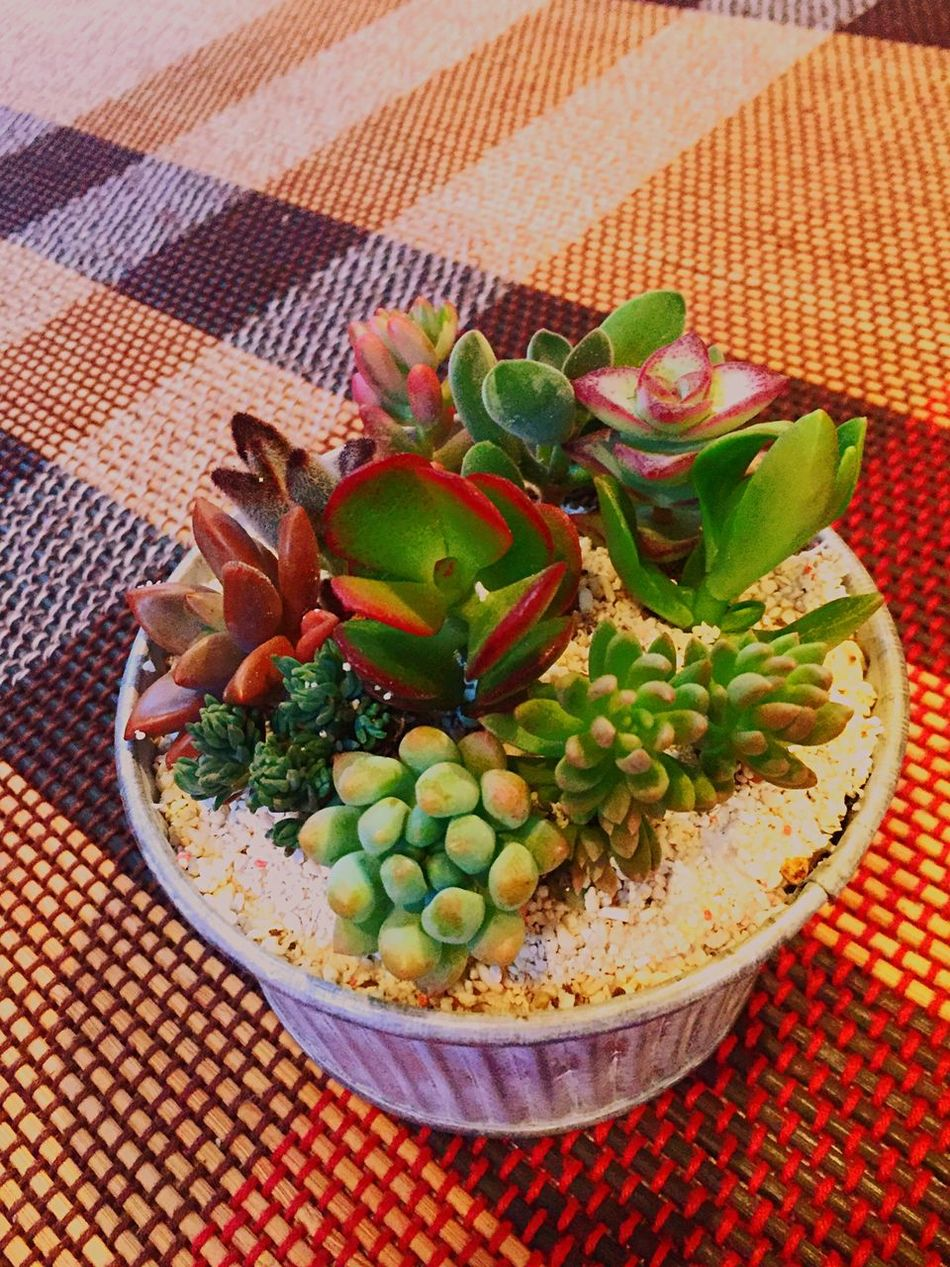 Mother's Day From Son To My Wife Succulent Plant Group Planting