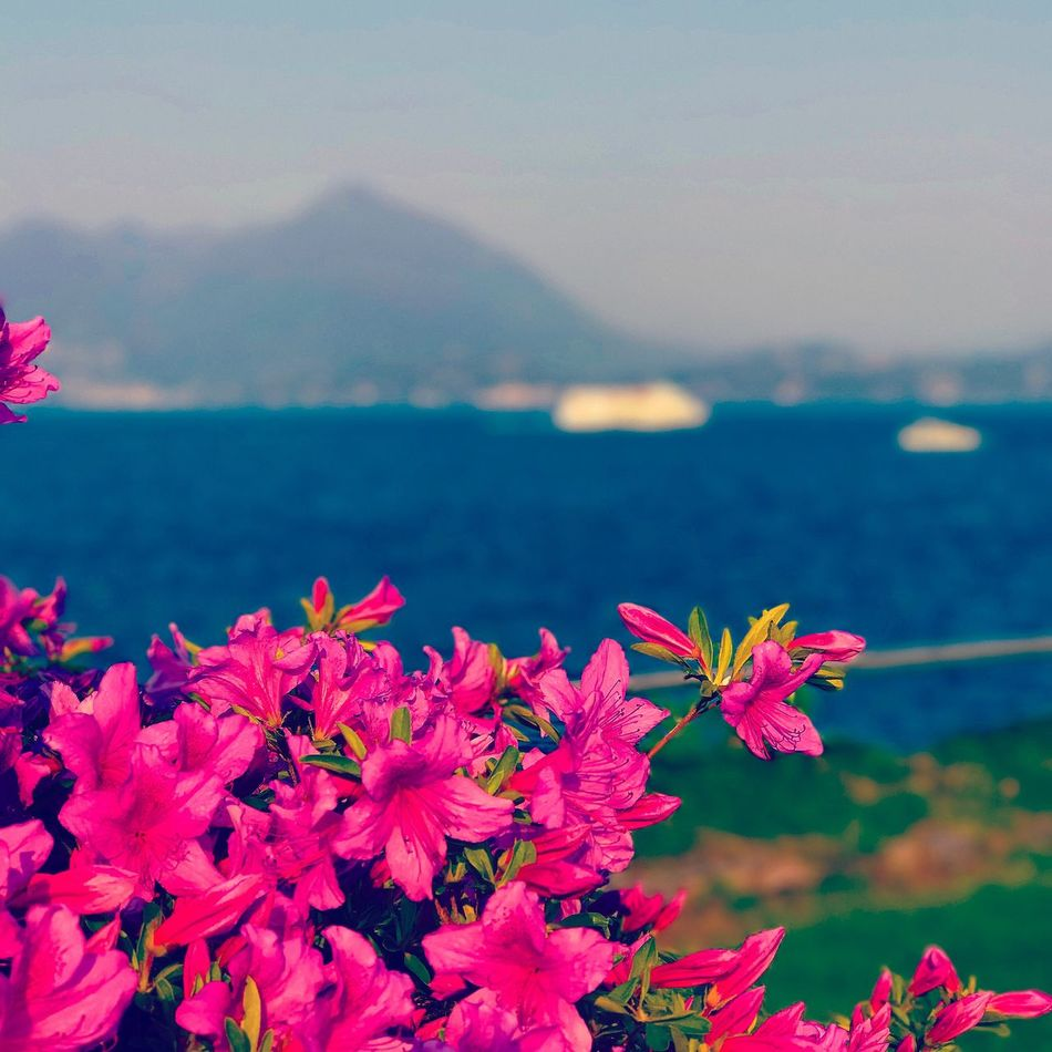 Flower Beauty In Nature Nature Fragility Growth Freshness Petal No People Water Outdoors Focus On Foreground Flower Head Tranquility Day Scenics Pink Color Plant Sea Blooming Close-up
