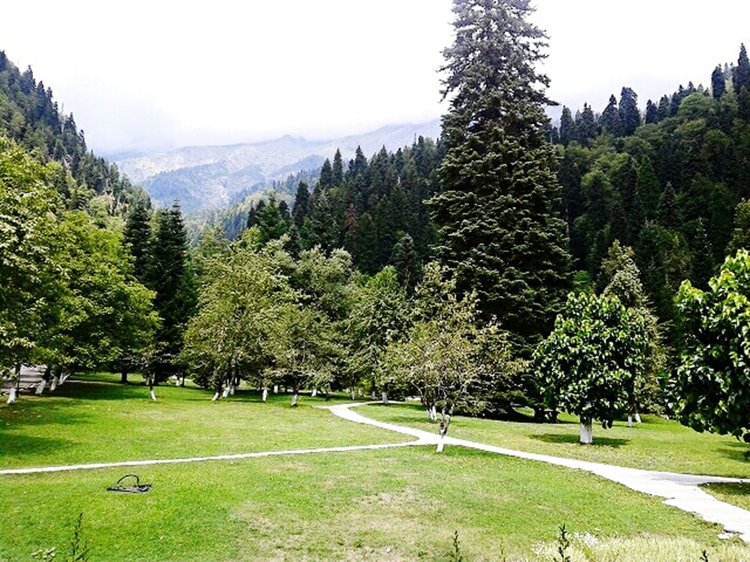 tree, road, tranquil scene, tranquility, transportation, mountain, scenics, empty, beauty in nature, travel destinations, green color, nature, day, non-urban scene, green, outdoors, tourism, solitude, growth, country road, mountain range, countryside, park, lush foliage, remote, curve, winding road, majestic, vacations, sky