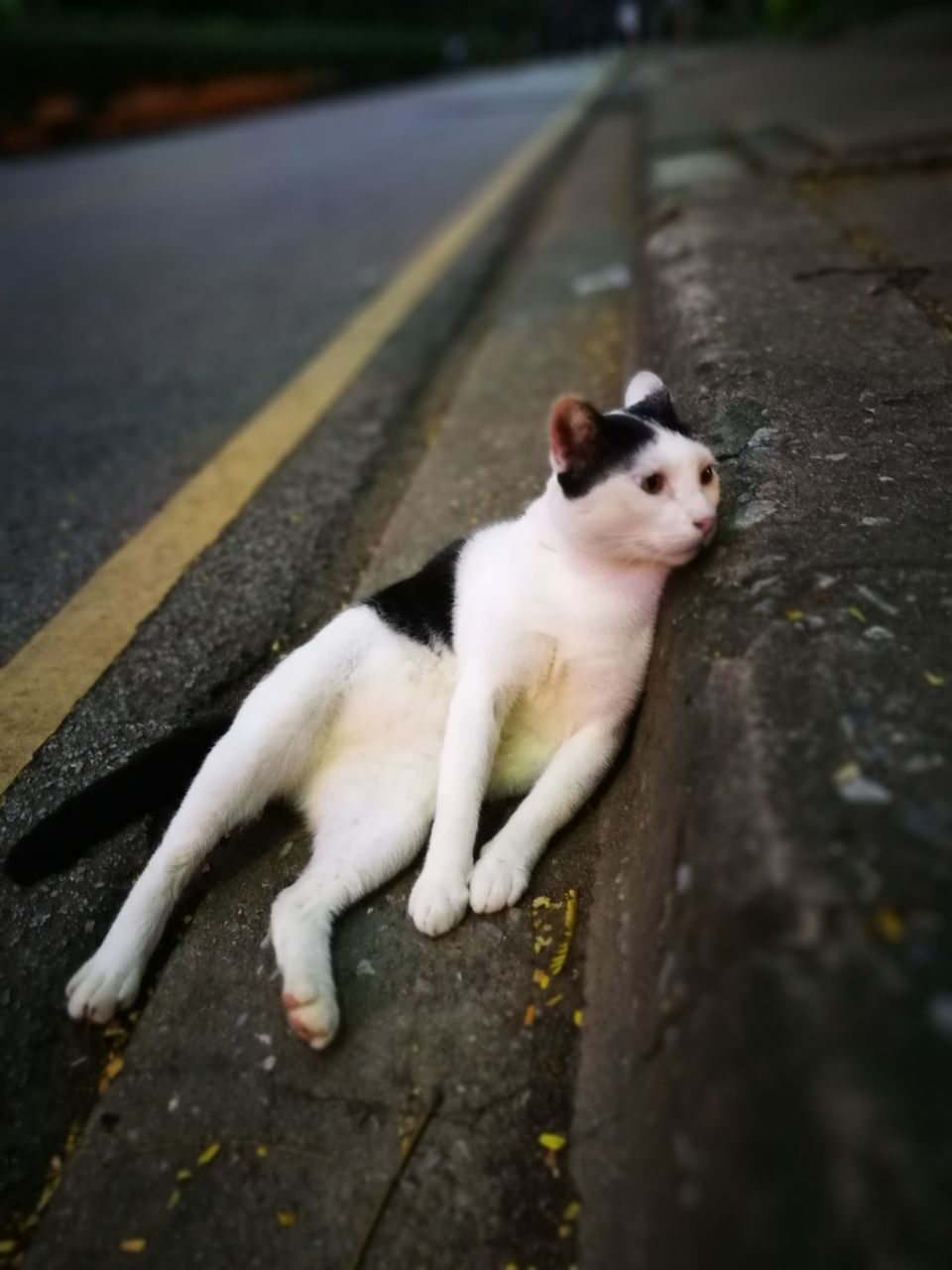 pets, one animal, domestic animals, animal themes, domestic cat, mammal, feline, outdoors, street, day, no people, looking at camera, road, portrait, sitting, dog, nature