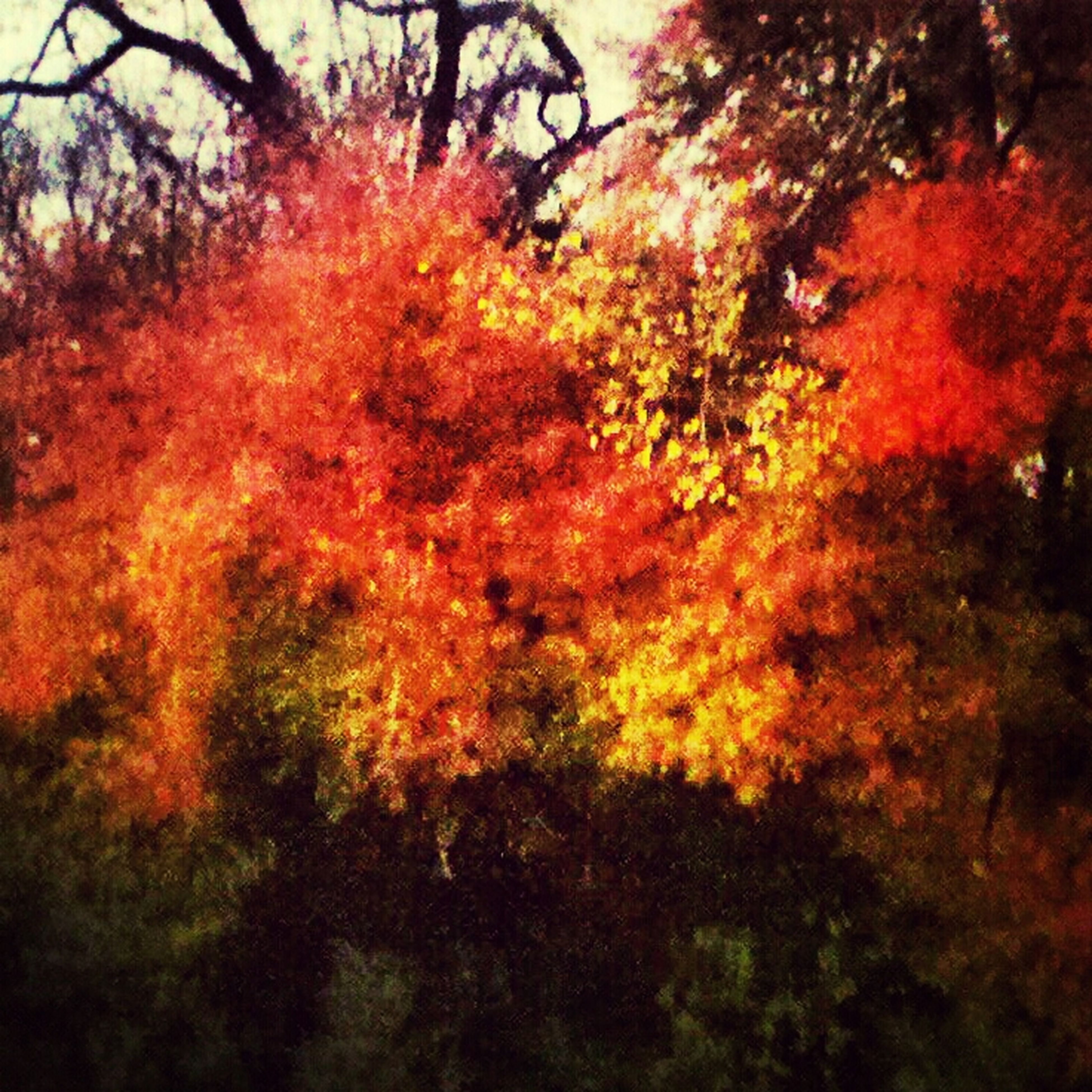 tree, orange color, autumn, growth, beauty in nature, nature, tranquility, branch, change, tranquil scene, red, scenics, forest, outdoors, season, sunset, no people, sunlight, idyllic, low angle view