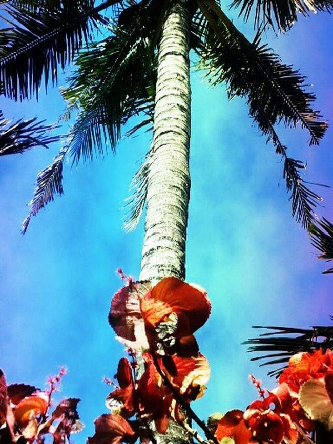I just look up and take a shot and I feel like I'm in Hawaii :)