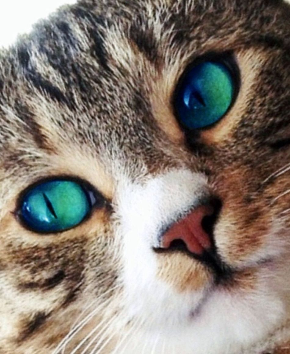Got my eyes on you, friends. Be sure to have a lovely Sunday. Mel&BomBi Tadaa Community Cat Cute Pets