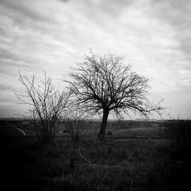 Monochrome_life Autumn TreePorn Nature