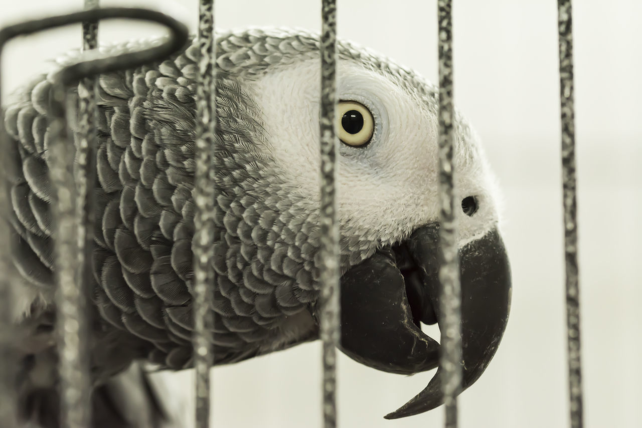 one animal, animal themes, close-up, bird, cage, no people, animal wildlife, focus on foreground, beak, animals in the wild, trapped, day, outdoors, nature