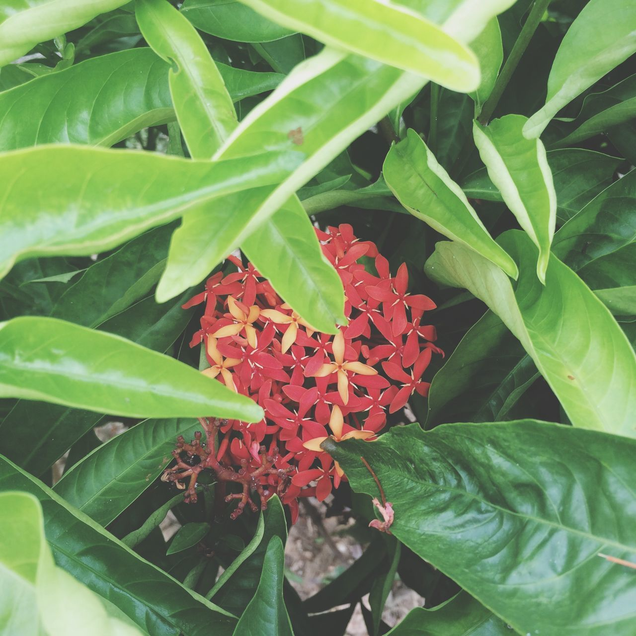 leaf, growth, plant, green color, nature, beauty in nature, red, freshness, fragility, outdoors, day, petal, close-up, flower, no people, blooming, flower head