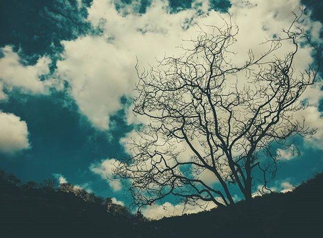 An abandoned tree & clouds make a landscape look beautiful. Vscocam Sky Clouds Landscape Voyagediaries _soi Skyporn Afadingworld Photooftheday Wearevsco Vscolife Vscogang Vscouser Vscodailydose Vscocamonly VSCO Vscogallery Vscocollections Vscomood Vscobest