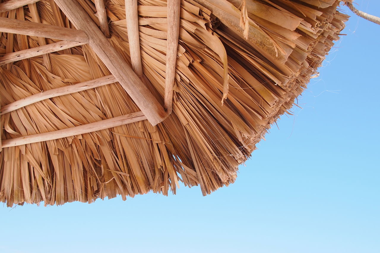 Beautiful stock photos of jamaica, Brown, Clear Sky, Close-Up, Cropped