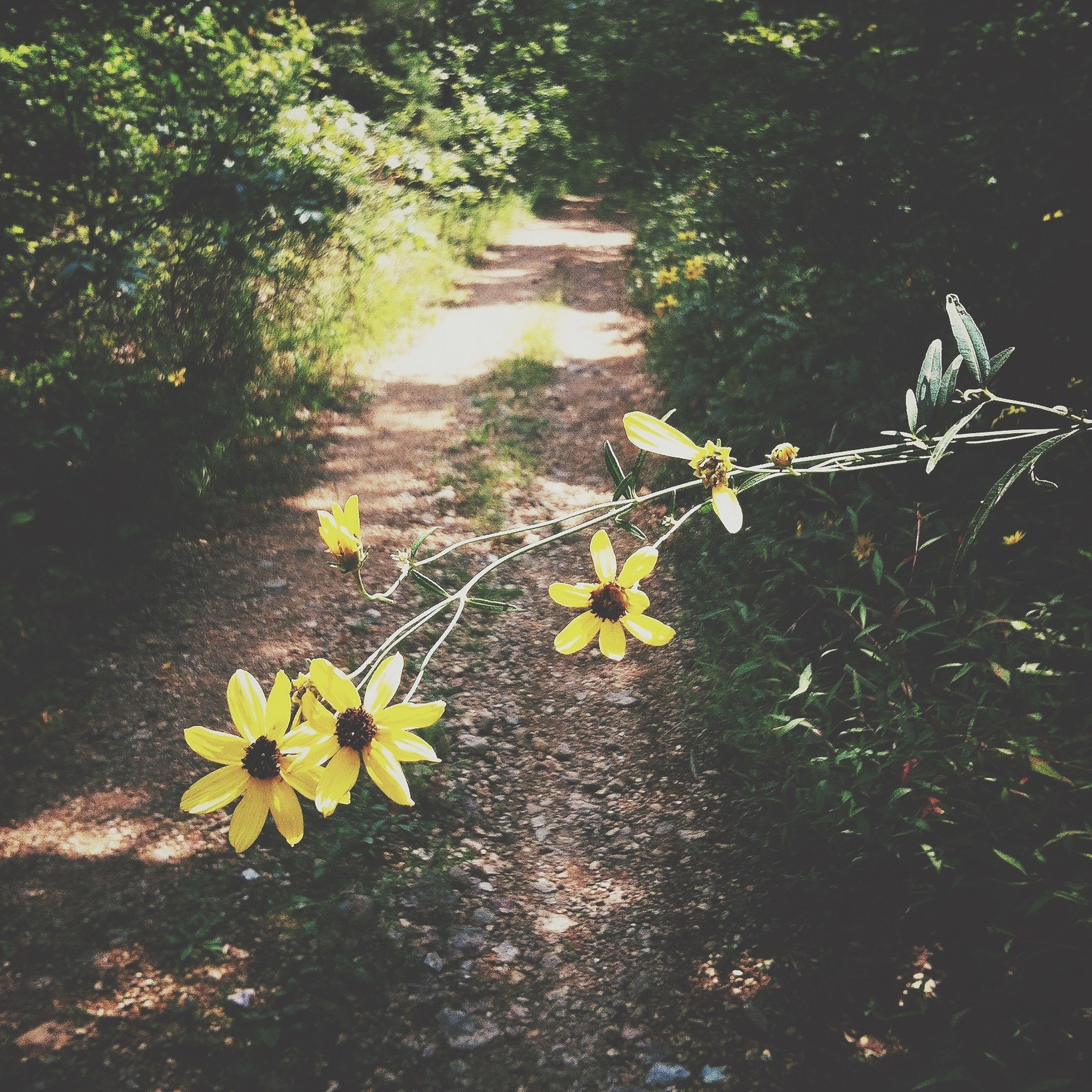Wild Flowers..