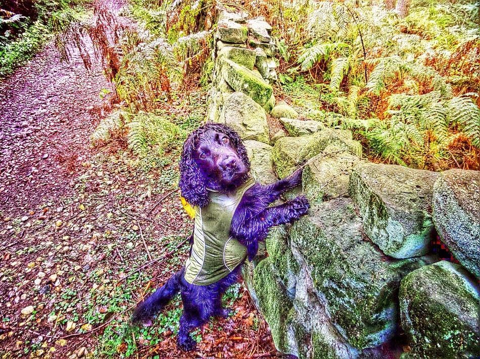 Dog Looking Countryside Stone Wall Dog Coat Damp