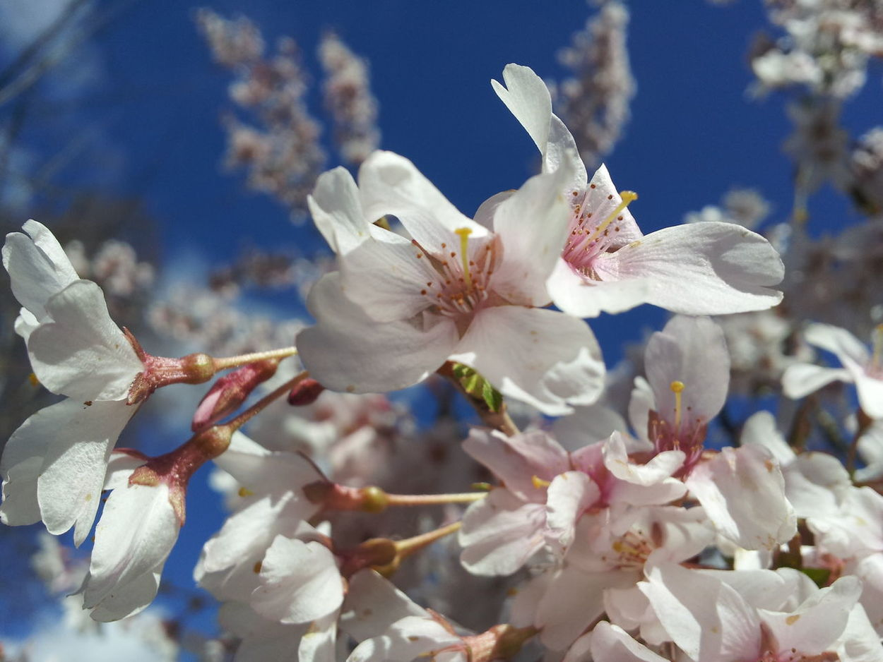 Beautiful Taking Photos StreamzooVille Spring! Eyeemnaturelover